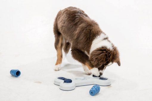 Dog playing with Trixie Flip Bone