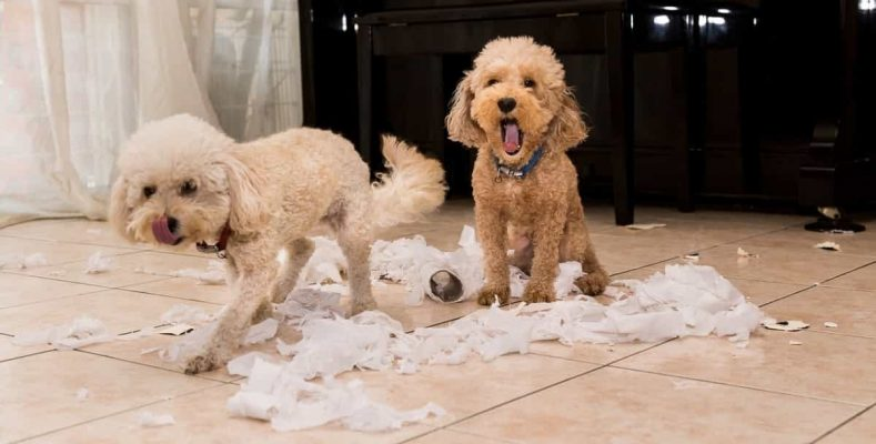 Bored Dogs Chewed Toilet Roll