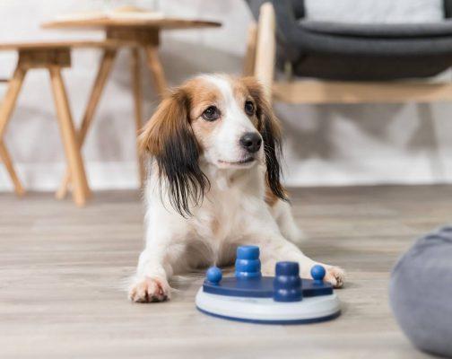 Push Away Dog Puzzle Toy